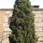 Un arbol y un edificio viejo